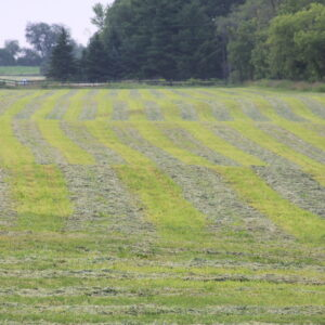 Clean high-quality hay is grown and baled on site.