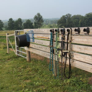 Pasture area with halter hooks for daily turnout.
