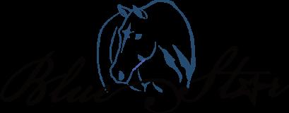 BSS logo2
