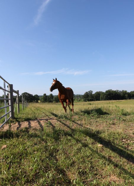 Paddocks and pastures are fenced with safe Horseguard fencing.